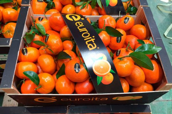 exportacion-naranjas-valencia-12