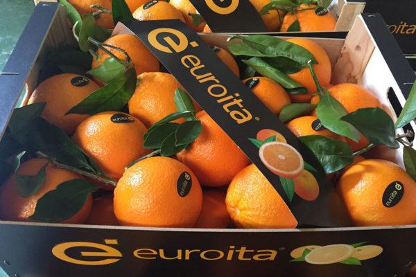 exportacion-naranjas-valencia-3