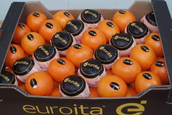 exportacion-naranjas-valencia-4