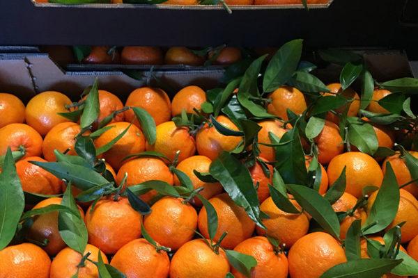 exportacion-naranjas-valencia-9